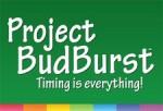 projectbudburst.jpg__225x1000_q85